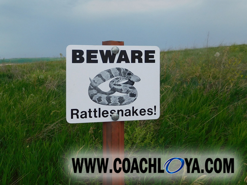 Racing, Rattlesnakes, and Warnings